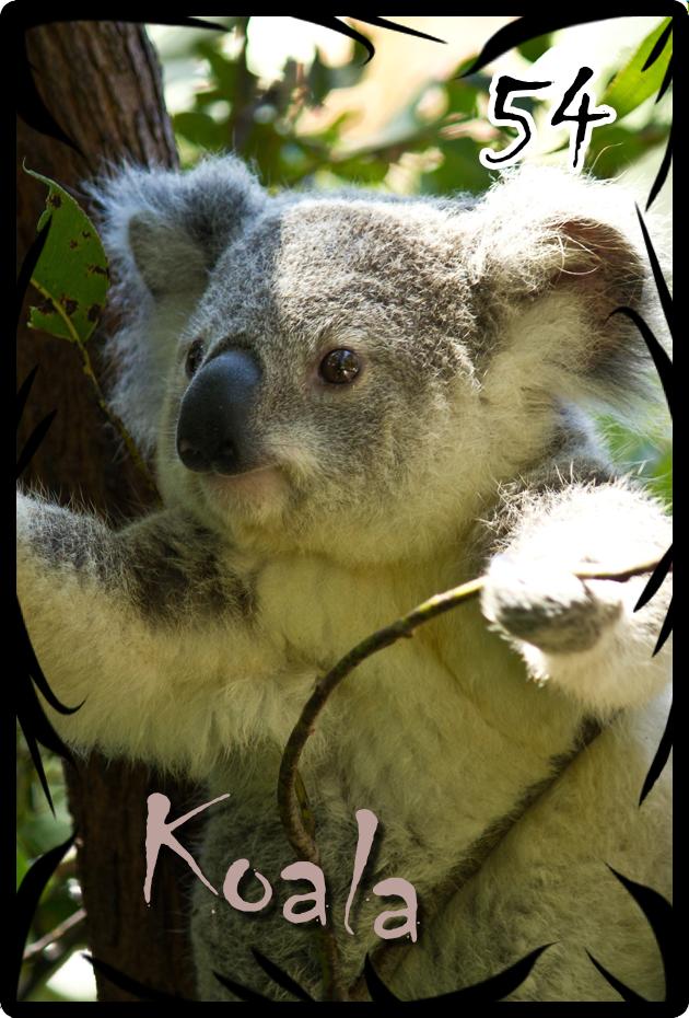 54 koala.png