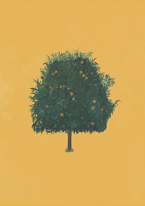 orange tree 3_a4.jpg