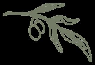Olive_SimpleOliveBranch_Logo_Large.png