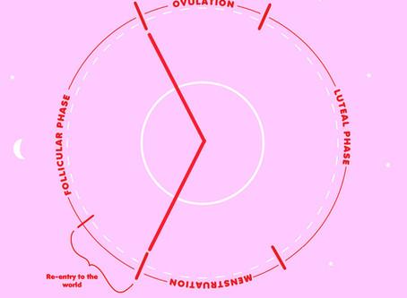 Follicular Phase