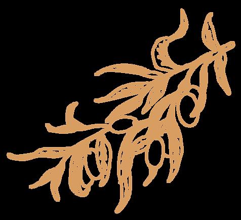 Apricot_OliveBranch1_Logo_Large.png