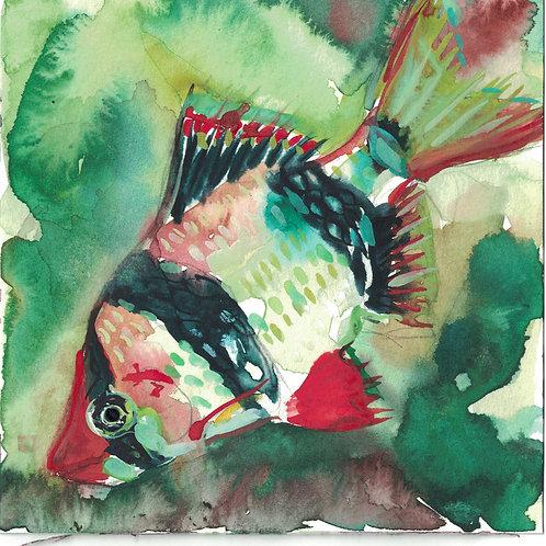 WENDY KLEMPERER | 6 x 6 Watercolor (Fish)