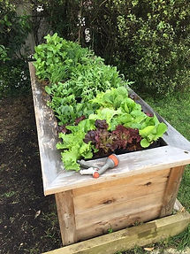 Jennifer Barclay Garden install.jpg