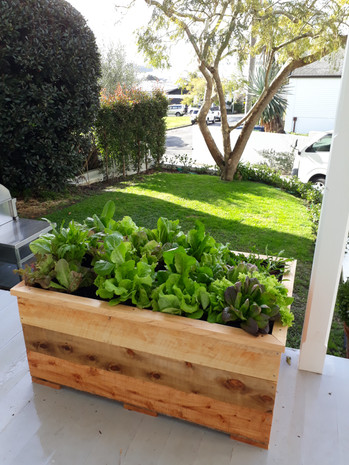 Grow plenty of produce in a small space