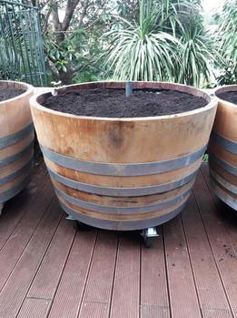 Self-watering wine barrels with optional wheels