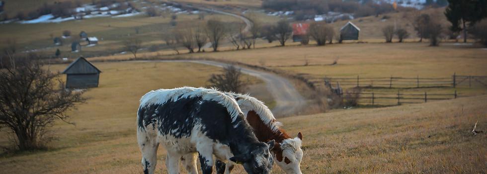Marosfő / Izvoru Mureșului Harghita county / Hargita megye / Județul Harghita Romania / Románia / România 2017