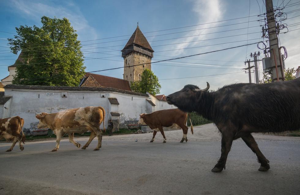Ecel / Ațel Sibiu county / Szeben megye / județul Sibiu Romania / Románia / România / 2018