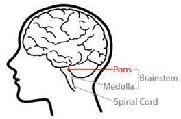 DIPG brain pic.png