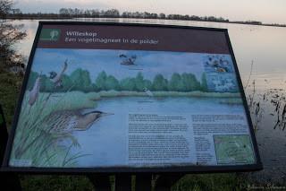Natuurgebied Willeskop