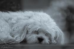 Hondenshoot/Dieren algemeen