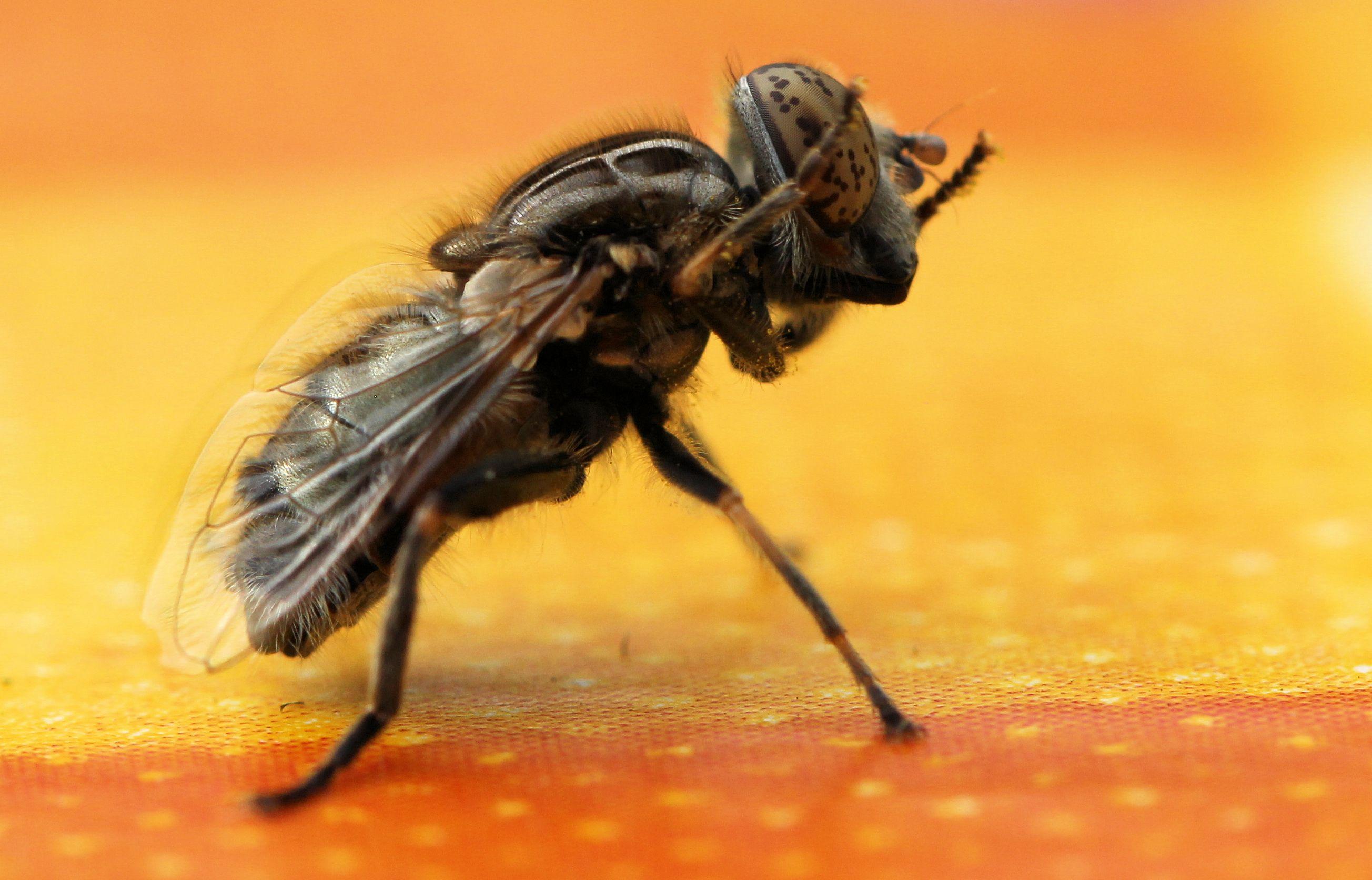 Insecten overig