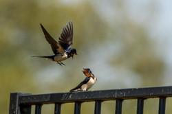 Vogels Diverse