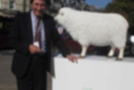 P campaign sheep.JPG
