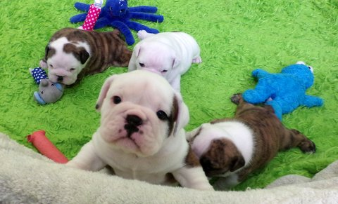 ginny pups new 2