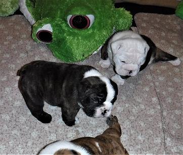 2021-07-25 00.59.24Lovey's pups 5 weeks old.jpg