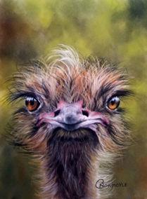 ostrichThumb.jpg