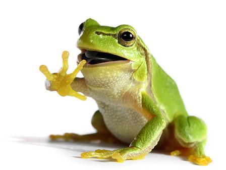 Frog Buckets