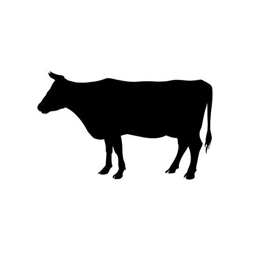 Beef Organ