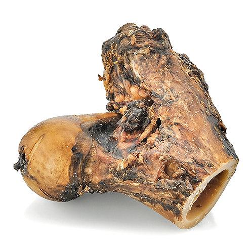 Bison Hock Bones