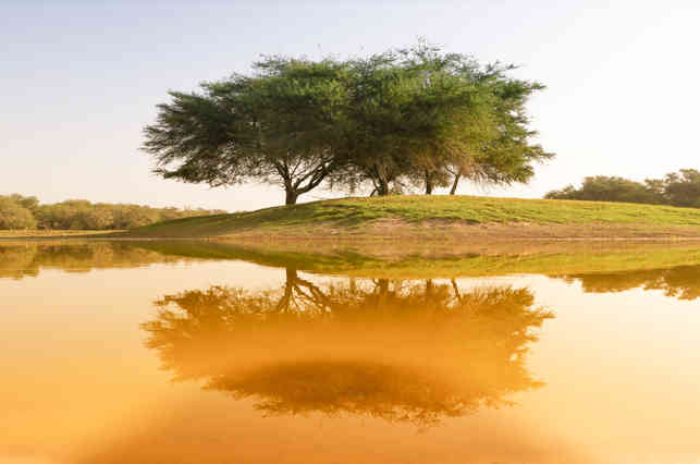 Natural view of reflection