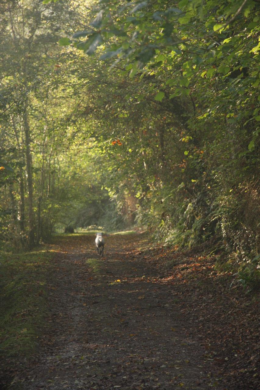 Dog Walking near the Tidal Road