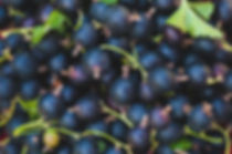berries-black-currants-wallpaper-preview