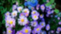 blchamo_edited.jpg