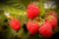 casadian_rasberry_2000x_edited.jpg