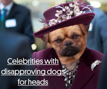 Dog Heads.jpg