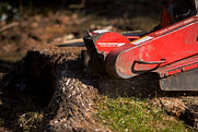 Stump Grinding - Your London Tree Surgeon
