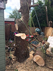 Tree Removal Service - Your London Tree Surgeon