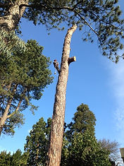 Your London Tree Surgeon - Tree Removal Service