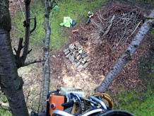 tree-surgery-glasgow-scotland-04.jpg