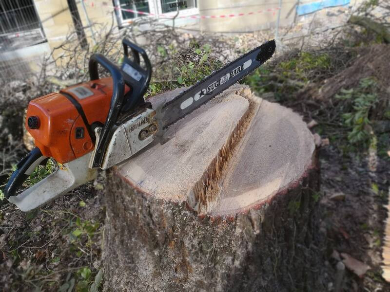 remove-tree-stump-glasgow-strathaven.jpg