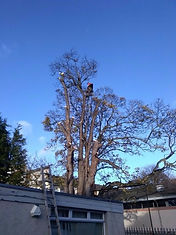 Tree Removal - Your London Tree Surgeon