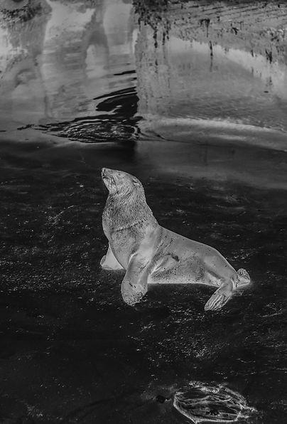GOODHOPE Photo Book by Hennric Jokeit  Seal Cape Town