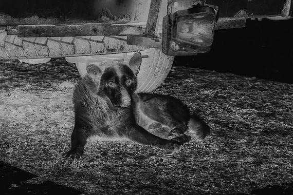 Photo Book GOODHOPE by Hennric Jokeit Photo of a dog