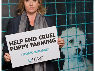 Portsmouth North MP backs new campaign targeting the cruel UK puppy trade