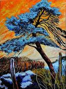 Le pin bleu