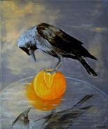 Choucas à l'orange