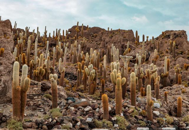 Cactus Island on Salir Uyuni