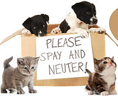 spay-neuter_edited.jpg
