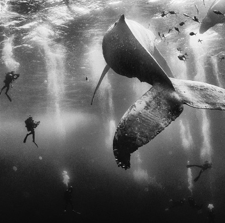 Il futuro del mare è nelle tue mani – Anno 2048