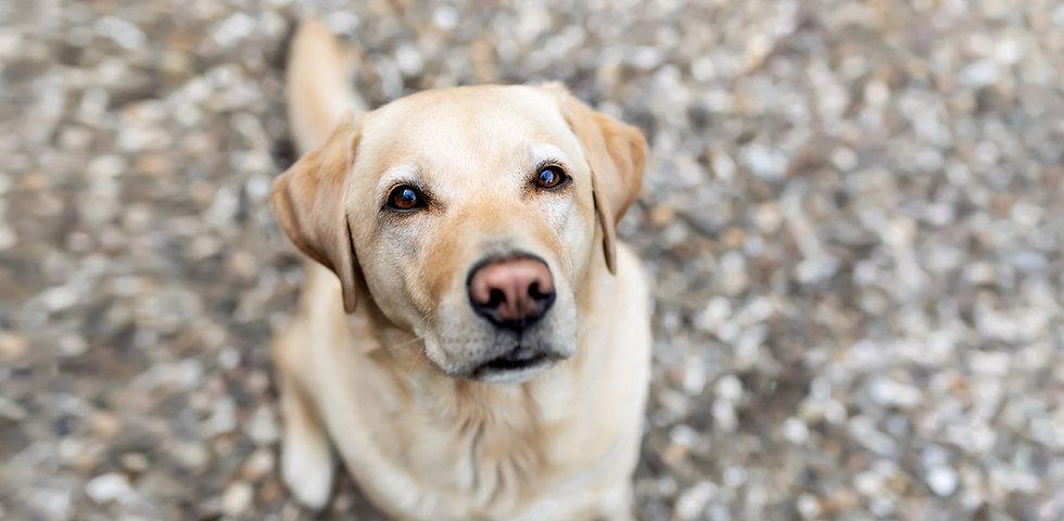 Willkommen bei der Mobilen Kleintierpraxis Oberberg | Tierärztin Anna Becker