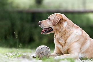 Tierverhaltenskunde/Hilfestellung bei Verhaltensproblemen