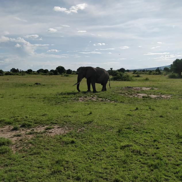 Magestic Safari