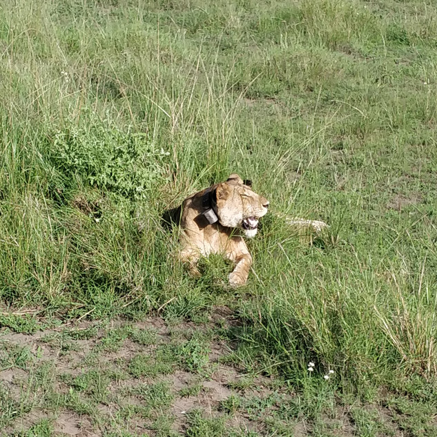 Safari, oppertunity not to be missed