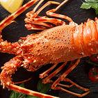 lobster-altamar.jpg