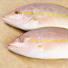 yellow-tail-altamar.jpg
