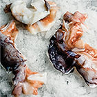 neck-giant-squid-altamar.jpg